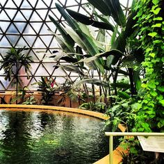 Australian Places and Events - Inside the Tropical Dome at Brisbane Botanical Gardens on Mount Coot-tha, Brisbane Qld.  (28/07/2013) by damienfoley, via Flickr