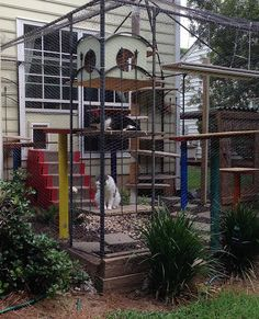 Purrfect Catio, Catio, Cattery, Enviroment enrichment for cats