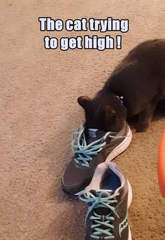 Silly Cats, Crazy Cats, Funny Cat Memes, Funny Cats, Animal Humour, Float Your Boat, The Funny, Hiking Boots, Lol