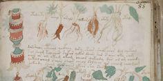Het 500 jaar oude, mysterieuze Voynich-manuscript waar niemand wijs uit kan worden, houdt onderzoekers al jaren bezig. Wat is het? Wie schreef het? En waar
