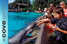 Op-Ed: SeaWorlds Convoluted Logic on Taijis Dolphin Slaughter  - Stop the Dolphin Slaughter NOW