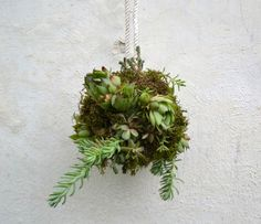 Decorate+Your+Garden+by+Making+These+Succulent+Balls