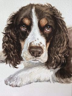 Springer Spaniel, Pet Portraits, Watercolor, Pets, Animals, Pen And Wash, Watercolor Painting, Animales, Animaux
