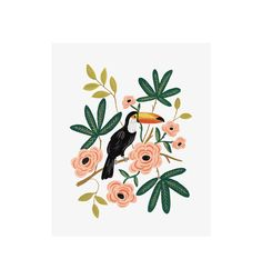 Rifle Paper Co. - Toucan - Illustrated Art Print