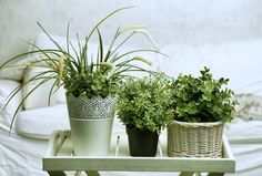 Poor indoor air quality poses potentially enormous health risks. Asthma, allergies, inflammation, and even cancer can come from poor air quality. Nothing shines a light to one of those fancy ass expensive air purifiers, but if you're looking for the less expensive, natural option, these six house pl...