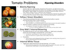 Image result for tomatoes blotchy ripening Tobacco Mosaic Virus, Tomato Seeds, Bed Design, Tomatoes, Yard, Vegetables, Image, Patio, Tomato Seed