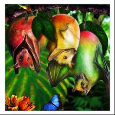 Fruit Bat!!!