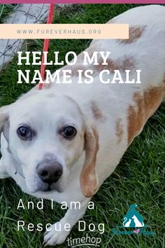 Hello My Name Is Cali, I am 17 years old and I am a Rescue Dog I was rescued 3 years ago from a pound in Utah. I was old, sick and dying. But now my life is happy and filled with love. Dog Rescue Shelters, Rescue Dogs, Dog Care Tips, Pet Care, Pet Sitters International, Facebook Dog, Funny Animals, Cute Animals, Cute Funny Dogs