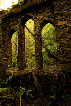 Ruins of an abandoned chapel being enveloped by the forest.