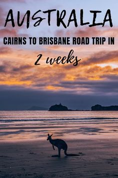 Planning a road trip along the East Coast of Australia? Check out this Cairns to Brisbane itinerary! Discover all the best places to visit and things to do if you're planning on spending 14 days doing a road trip from Cairns to Brisbane (or vice versa)! Melbourne, Sydney, Coast Australia, Visit Australia, Australia Holidays, Australia Tours, Australia Beach, Brisbane Australia, Cook Islands