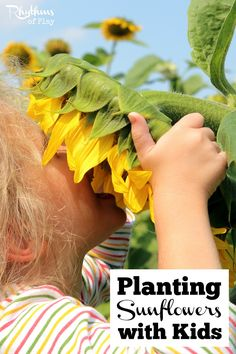 Planting sunflowers is a perfect first gardening project for kids. They are one of the easiest flowers to plant from seed directly into the earth. They quickly grow into large magical flowers that kids love to admire and enjoy. Gardening with Kids | Kids Outside Activities