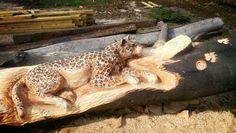 Leopard horse jump in beech