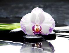Orchidee, Ingwerblüte, Golden Lotus - Exotische Blumen online bestellen
