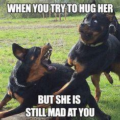 Funny Animal Jokes, Funny Dog Memes, Funny Animal Pictures, Animal Memes, Funny Dogs, Funny Animals, Dog Pictures, Hilarious Pictures, Comedy Pictures