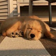 Super Cute Puppies, Cute Baby Dogs, Cute Little Puppies, Cute Dogs And Puppies, Cute Little Animals, Cute Funny Animals, Doggies, Cutest Dogs, Cutest Dog Breeds