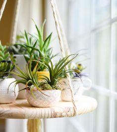 wat je kunt doen met plantjes
