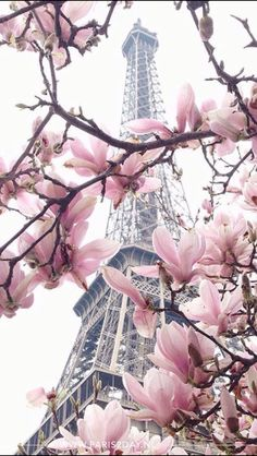 Torre Eiffel Tower Photography, Paris Photography, Nature Photography, Torre Eiffel Paris, Paris Eiffel Tower, Paris Wallpaper, Disney Wallpaper, Cute Wallpaper Backgrounds, Pretty Wallpapers