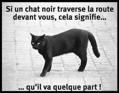 If a black cat crosses the road in front I Love Cats, Cute Cats, Funny Cats, Dark Humor Comics, Dancing Cat, Cat Stands, Cat Mouse, Image Fun, Good Jokes