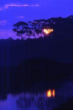 View looking toward the sun at Tomoka State Park - Ormond Beach, Florida.