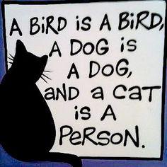A bird is a bird, a dog is a dog and a cat is a person.