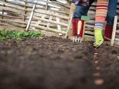 Survival Food Series: 25 Survival Seeds You Need For Your Garden Organic Seeds, Grow Organic, Organic Gardening, Gardening Tips, Sutton Seeds, Mother Earth News, Survival Food, Survival Prepping, Emergency Preparedness
