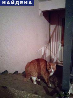Найдена кошка красивый рыжий котик г.Тверь http://poiskzoo.ru/board/read32065.html  POISKZOO.RU/32065 Два дня назад в нашем подъезде появился рыжий котик! Ухоженный, чистый, красивый! Может, кто подбросил ( Очень жалко, может, кто сможет взять к себе домой друга?   РЕПОСТ! @POISKZOO2 #POISKZOO.RU #Найдена #кошка #Найдена_кошка #НайденаКошка #Тверь
