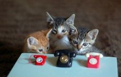 Silly cats can't use telephones