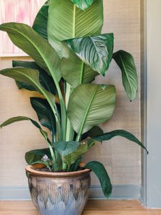 Philodendrons - Houseplants 101: Choosing the Right Indoor Greenery on HGTV