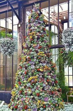 A SUCCULENT CHRISTMAS TREE!!!