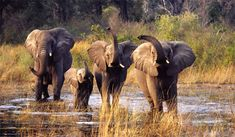 African Safari - was amazing!!!!