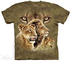 3484 Find 10 Lions