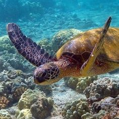 Love swimming with the turtles.