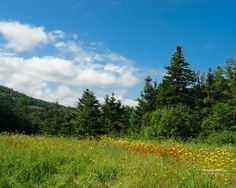 Google Image Result for http://www.phototravelpages.com/wallpapers/meadow_4_1280.jpg