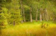 Barb  Lewis - Fairies_ Meadow