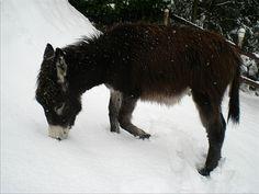 Cacao scopre la neve!