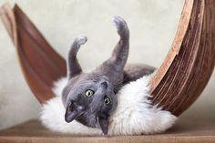 Co zrobić, by kot był szczęśliwy?