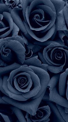 Denim colored rose wallpapers flowers, flower wallpaper ve black wallpaper. Flor Iphone Wallpaper, Cellphone Wallpaper, Black Wallpaper, Flower Wallpaper, Wallpaper Backgrounds, Wallpaper Desktop, Phone Backgrounds, Wallpaper Samsung, Screen Wallpaper