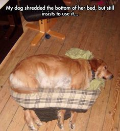 She has a wearable bed now…
