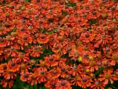 Fall Flower Pots, Fall Flowers, Large Flowers, Fall Containers, Best Perennials, Fall Plants, Garden Plants, Shade Trees, Garden Pictures