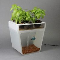Self-Cleaning Fish Tank That Grows Food   *SCIENCE'D!*