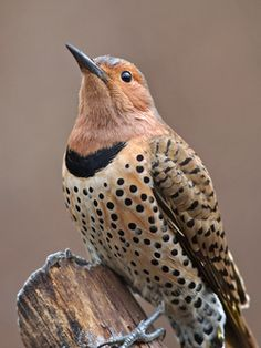 The 17th annual GBBC will be held Friday, February 14, through Monday, February 17, 2014. Please visit the official website at www.birdcount.org for more information and be sure to check out the latest educational and promotional resources.