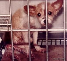 Please sign!   Let's end animal testing and vivisection