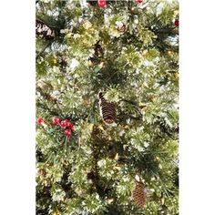 Trees, Technology and Pine on Pinterest