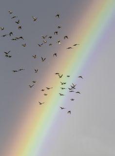 Rainbow by Stefania Loriga / Look Wallpaper, Rainbow Wallpaper, Aesthetic Iphone Wallpaper, Aesthetic Wallpapers, Rainbow Light, Love Rainbow, Over The Rainbow, Rainbow Photography, Nature Photography