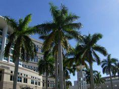 Nova Southeastern University admissions information