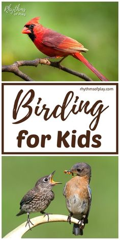 Birding for Kids - Children will love this list of Bird-watching activities and lessons for kids. Backyard birdwatching is a great way to study nature! Outside Activities For Kids, Nature Activities, Kids Learning Activities, Summer Activities For Kids, Lessons For Kids, Summer Science, Great Backyard Bird Count, Backyard Birds, Nature Hunt
