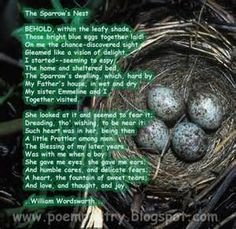 song sparrows nests - Yahoo Image Search Results