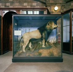 British Museum of Natural History, London, England, 1985. From Richard Ross's Museology.