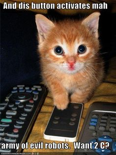 kitten pics with captions | My Top Collection Funny kitten pics with captions 3