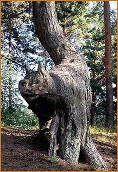 """Here's a first! - a Tree Cat"" (grabbed from ""The Others"", a wonderful board for fantasy lovers)"